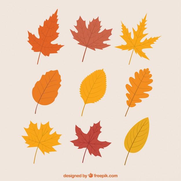 2葉っぱ枯れ葉秋無料フリー素材